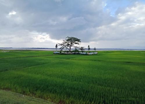 beautifulbangladesh bangladesh evergreen green nature naruralbeauty