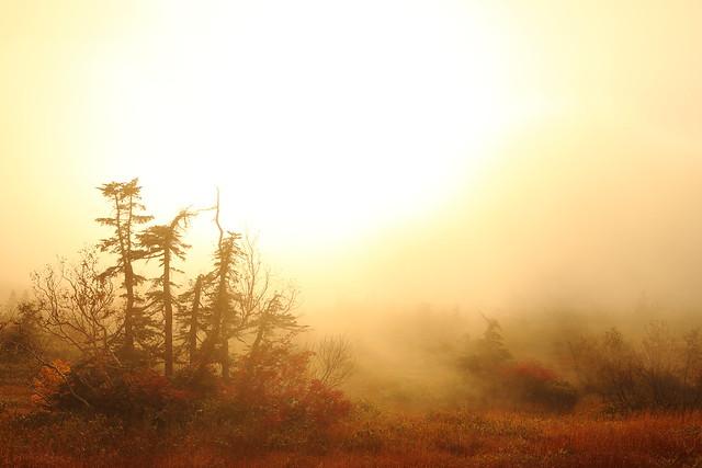 The foggy wetland