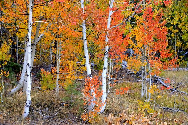 Fall Colors near Tahoe, California