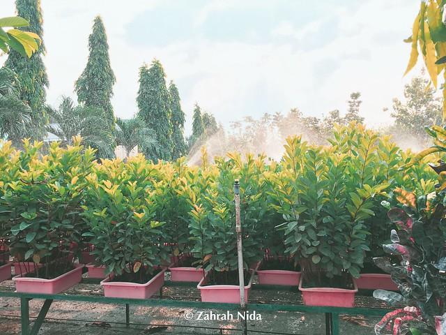 Balai Persemaian Permanen (BPDAS BRANTAS) Balai Pengelolaan Daerah Aliran Sungai Brantas