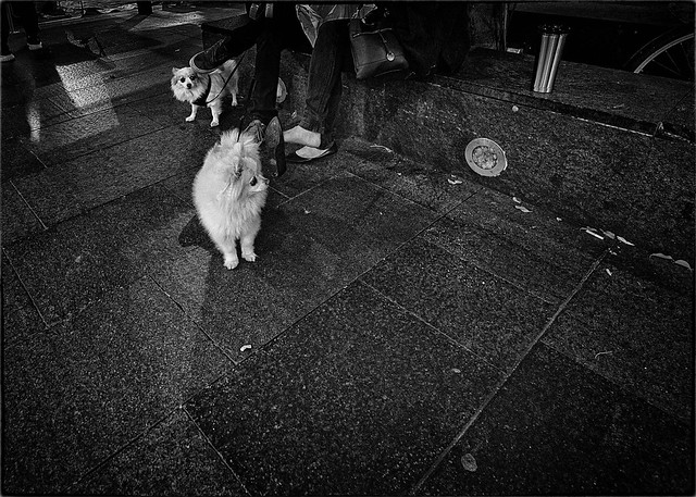 Nervous Dogs in China Town