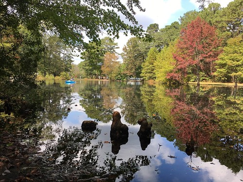 Photo of colorful trees in Pocomoke River