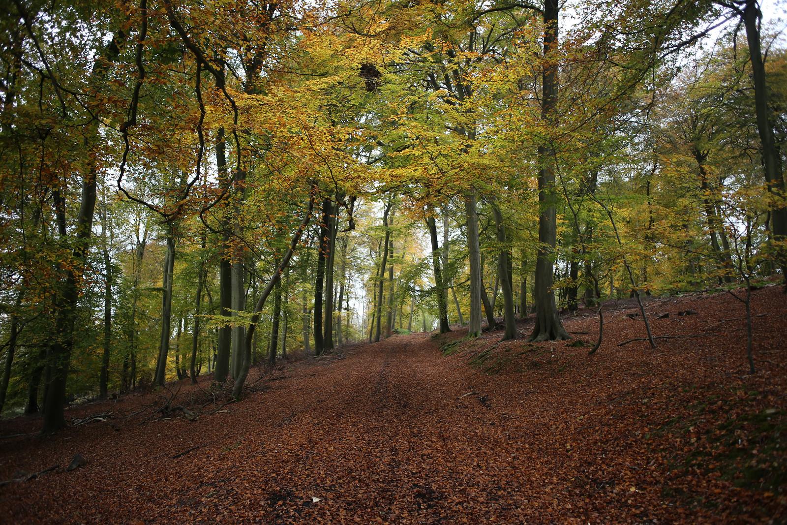 Ridge Wood, Hambleden