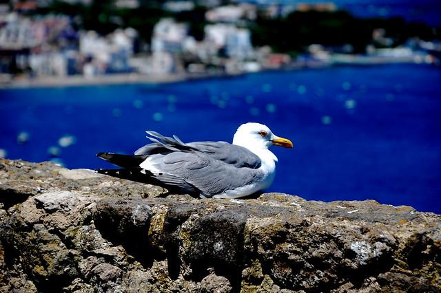 Seagull..