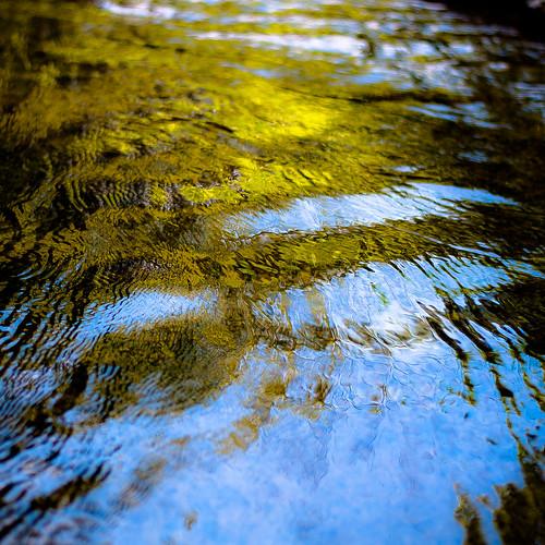 d5000 desplainesriver dof nikon sedgemeadowforestpreserve abstract blur depthoffield forest natural noahbw reflection river square summer water woods