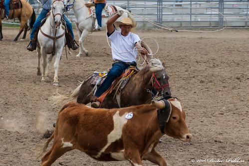 usa colorado kiowa county fair elbert rodeo pferd rind cowboys