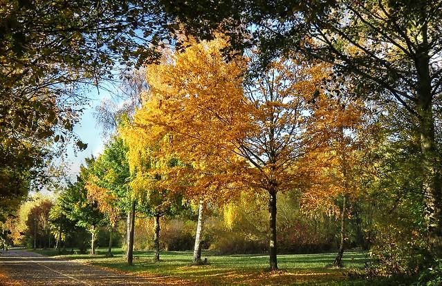 Herbst an der Pappelallee Greifswald