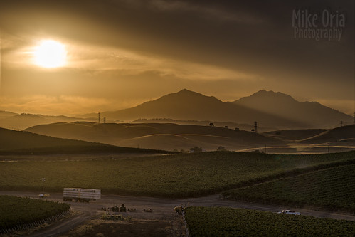 brentwood california contracosta county mount mountain mountdiablo diablo mtdiablo sunset sunrise sun field crop vineyard grapes shadow layers gold peak pentax pentax645z 645 645z fa150 150mm