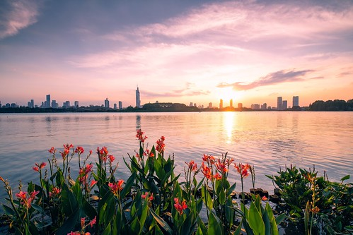 skyline city nanjing jiangsu china cn cityscape flower lake landscape landmark sky skyscraper sunset twilight dusk reflection summer travel outdoor nikon nikond850 tamronsp1530f28