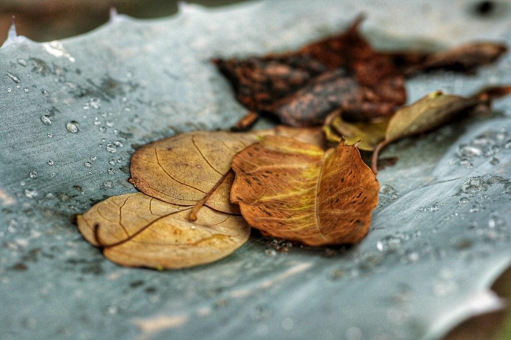I like the Autumm. Me gusta el otoño