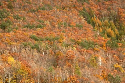 autumn autumnleaves autumncolors forest fallcolors fallenleaves tree trees nature natural landscape view 岩手県 葛巻町 袖山高原 久慈市 平庭高原 紅葉 森林