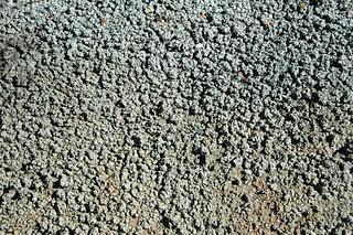 Popcorn weathering (Big Blue Bentonite, Sentinel Butte Formation, Upper Paleocene; Coal Vein Trail, Roosevelt National Park, Little Missouri Badlands, North Dakota, USA) 5