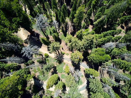 yosemite sequoia