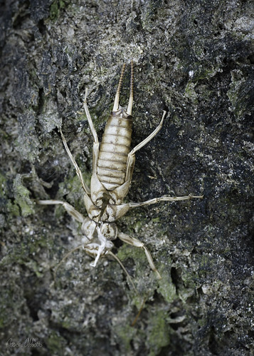 Stonefly | by Trail Image