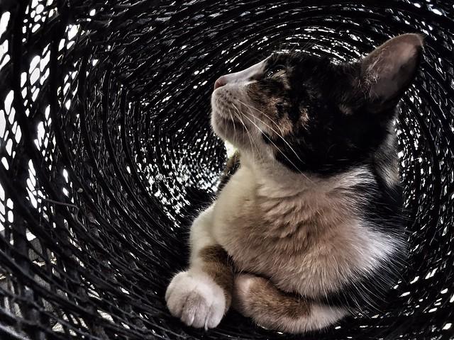 The cat portrait