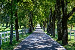 The road | by lskornog