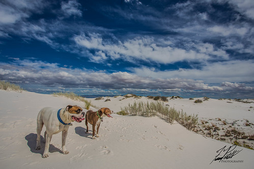 Dogs at White Sands | by Frank Portillo