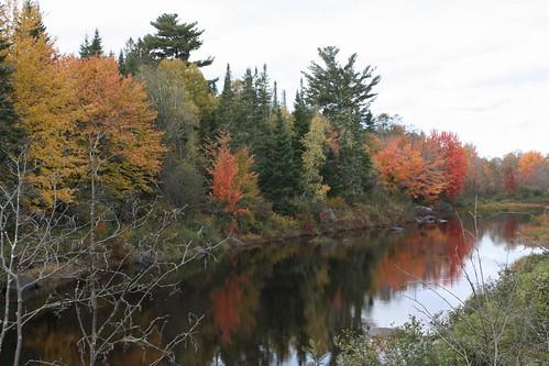 dumbarton newbrunswick canada river fall foliage leaves trees colors