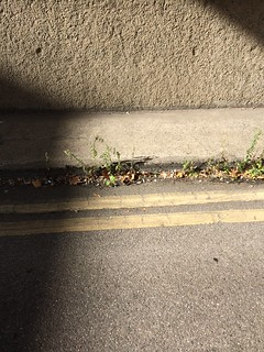 Weeds in the gutter