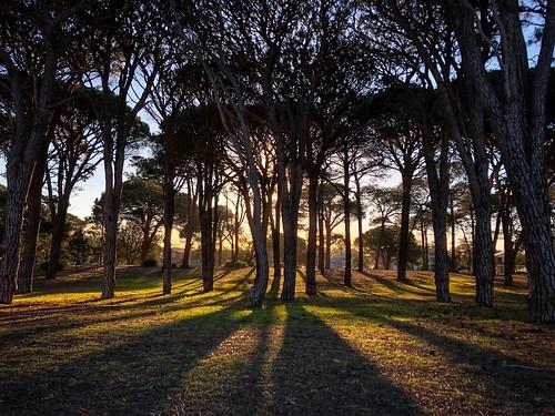 park pinetrees shadows iphone sunset pinepark challengeyouwinner cyunanimous matchpointwinner mpt671