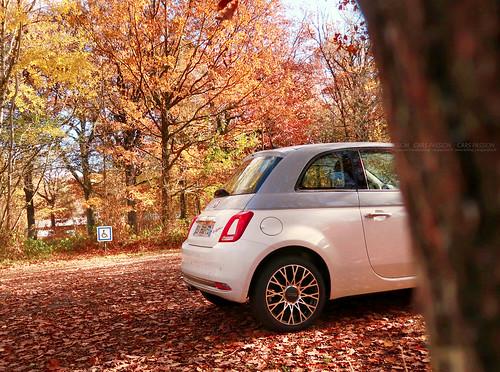 Fiat 500 Autumn | by dsgforever