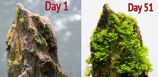 day 1 vs day 51 dsm | by nigel_kh