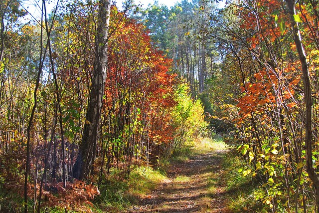 colorful forest :)