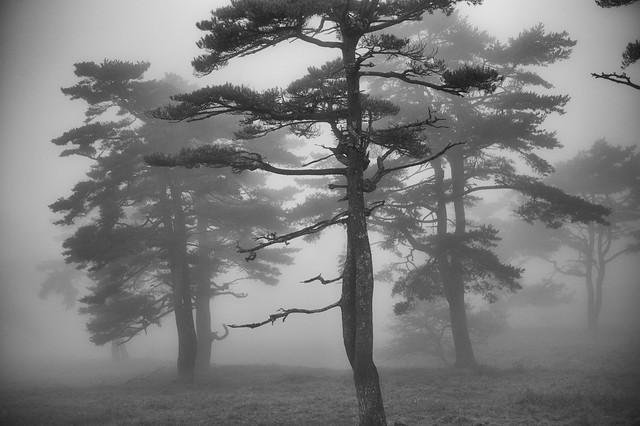 walk in the fog 4
