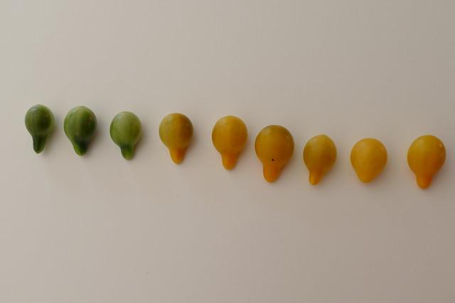 10.15.18.Les Tomates