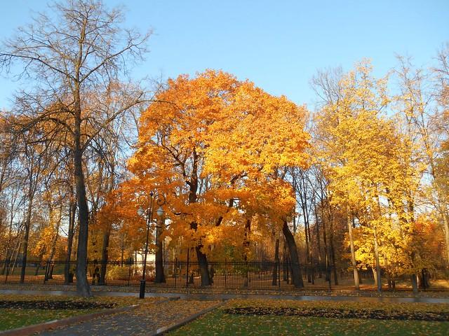 Осень в парке Останкино