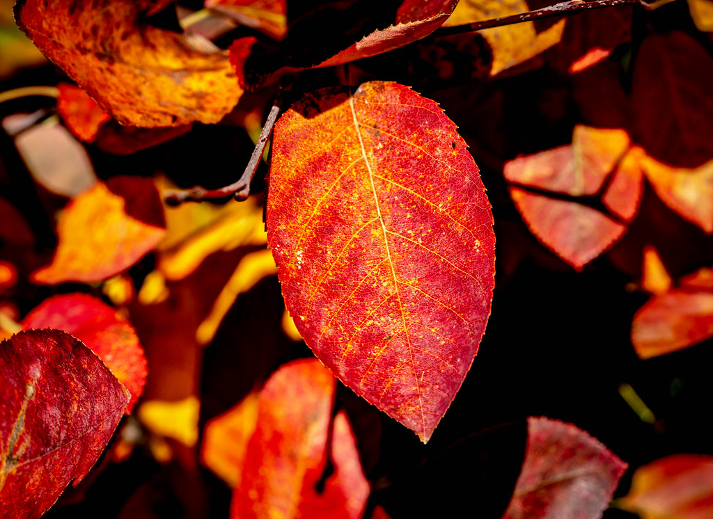 Red leaf in the autumn