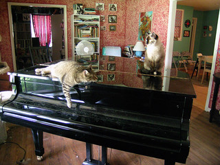 piano cats | by patti haskins