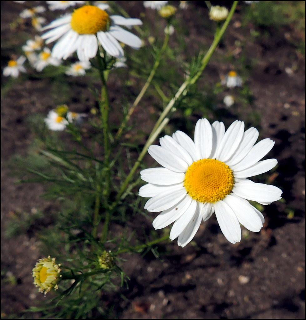Касарги 8815 Flores.