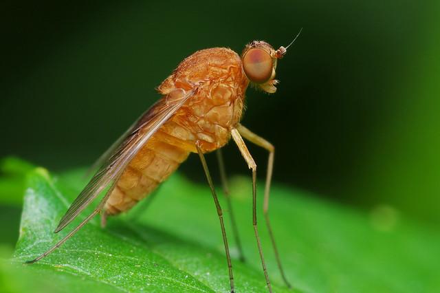 Snipe Fly V2