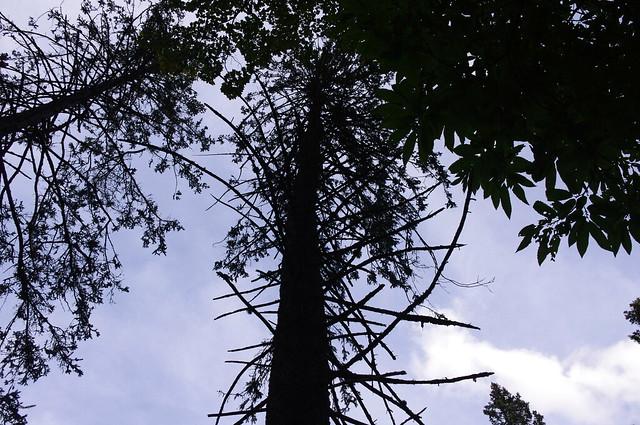 Camaldoli - Parco delle foreste Casentinesi