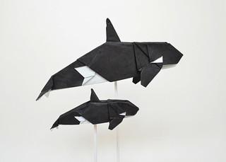 Orcas | by Ponadr