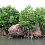 Sinnakarachchi Lagoon