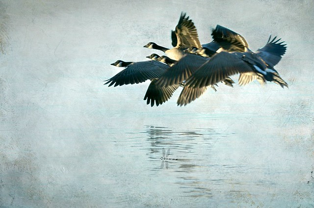 the landing party . . .