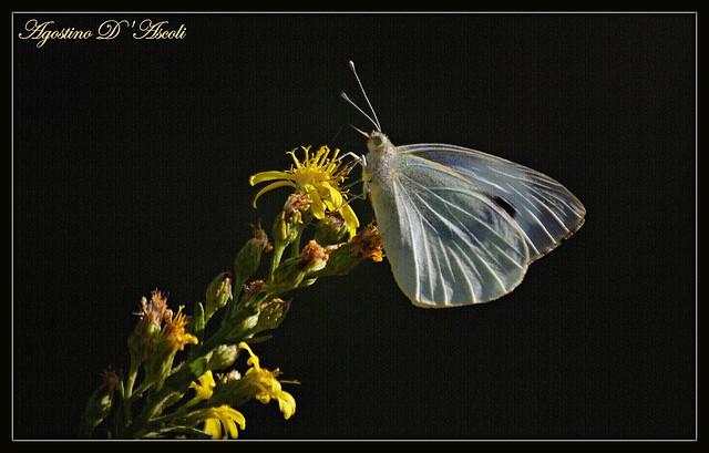 Farfalla in Autunno - Novembre-2018