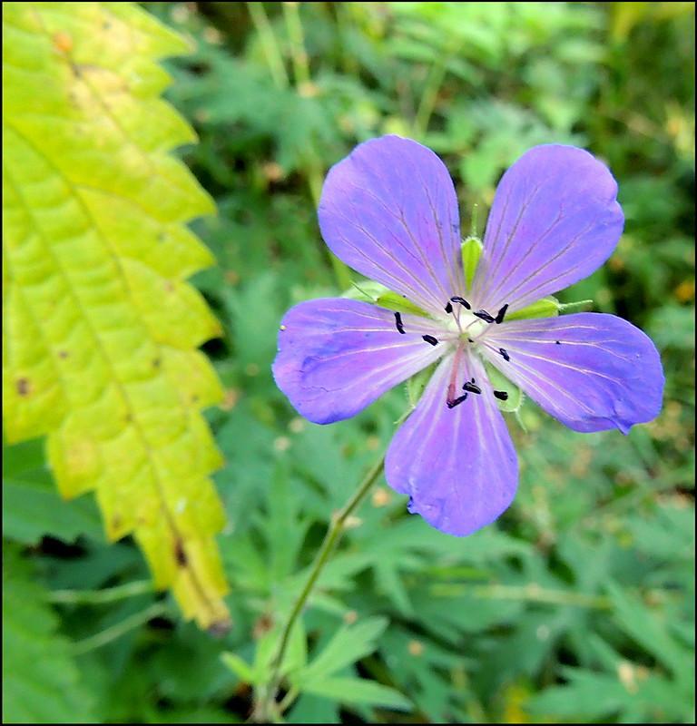 Касарги 8763 Flores.