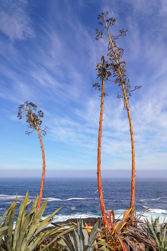 oceanopacifico chile zapallar travel arturonahum seascape sea mar pacificocean sky