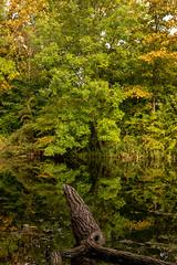 Autumn Reflections at Kastellet