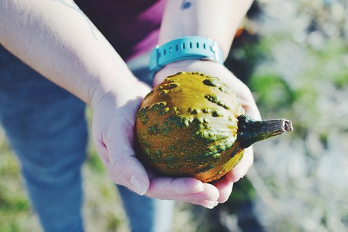 Mini pumpkin knobbly | by My Two Mums
