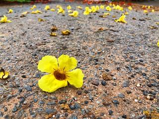 Flower strewn path