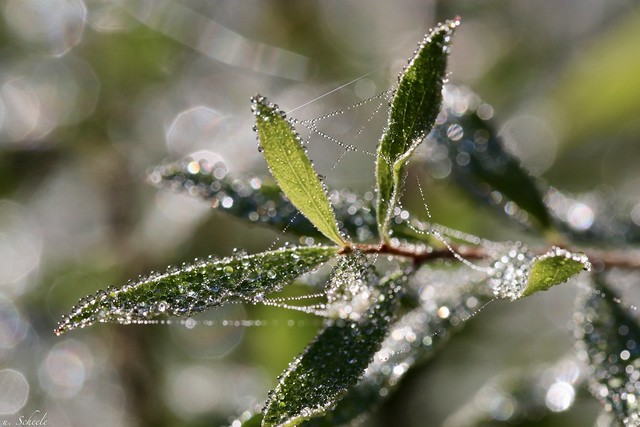 Morning dew drops..
