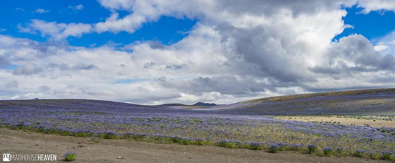 Iceland - 2080