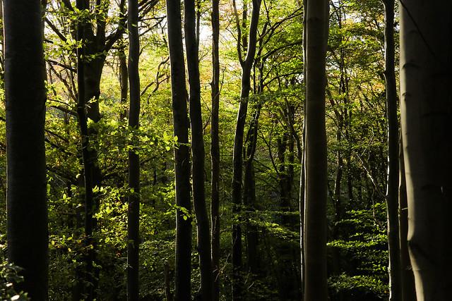 Last light in the woods