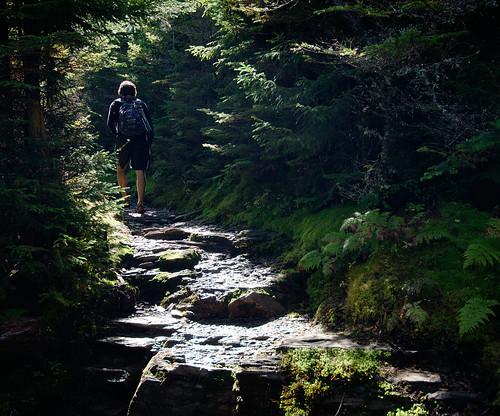 Down the path | by Alex Hirzel