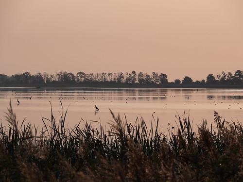 landschaft landscape outdoor nature natur wasser water baum tree sonnenaufgang sunrise anklam