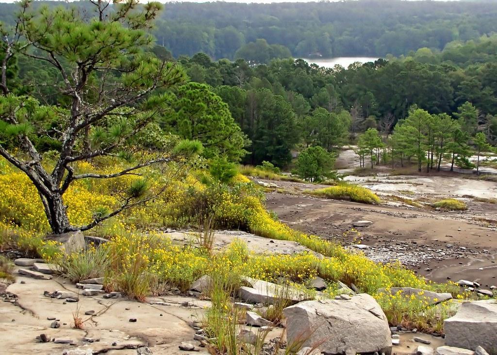 On Stone Mountain Yellow Daisies And Stone Mountain Lake John